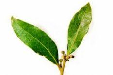 alternatív, gyógyítás, gyógynövény