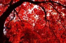 háború, nap, szerelem, vér, vörös