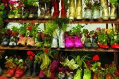 kert, kiállítás, otthon, virág