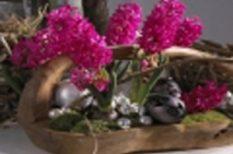 húsvét, locsolás, tavasz, virág