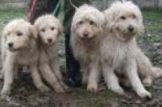 állatok, gyógyítás, jótékonyság, koncert, kutya