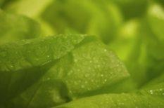 élelmiszer, föld, növény, természet