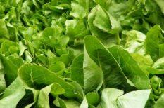 bio, jóga, programok, vegetáriánus, zöldség