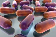 Boehringer Ingelheim, gyógyszer, gyógyszergyár, Superbrands díj, Superbrands program