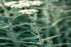 gyógyító természet, gyógynövény, hétvégi programajánló, Magyar Mezőgazdasági Múzeum