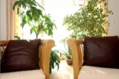 Dísznövény Kiállítás és Vásár, fürdőszoba, gyógynövény, növény, szoba