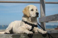 állattartás, gyerek, Gyerekek és kutyák, háziállat, kutya