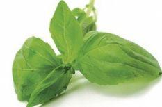 bio, fűszer, konyha, növény, zöld