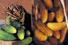 recept, savanyúság, táplálkozás, uborka