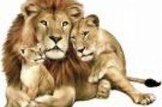 horoszkóp, kapcsolat, oroszlán, szex