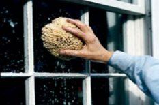 baktérium, betegség, egészség, lakás, nyár, tisztaság