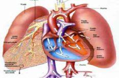 betegség, kapcsolat, kezdet, rák, tüdő