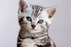 állat, budapest, kiállítás, macska, program