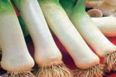 fehérboros Póréhagymaleves, hagyma, Palacsintatésztás, recept, tejszínes