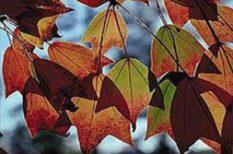 család, gyerek, kirándulás, ősz, ünnep