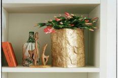 kaktusz, karácsony, otthon, ünnep, virág