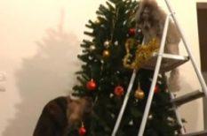 ajándék, fenyőfa, jézus, karácsony, kutya, szeretet