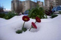 egészség, havazás, hideg, tél, ünnepek