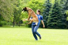 állat, kutya, személyiség