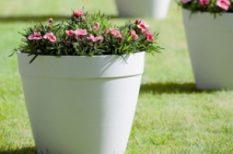 növény, tavasz, virág