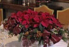 karácsony, ünnep, virág
