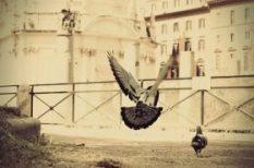élet, szabadság, szerelem