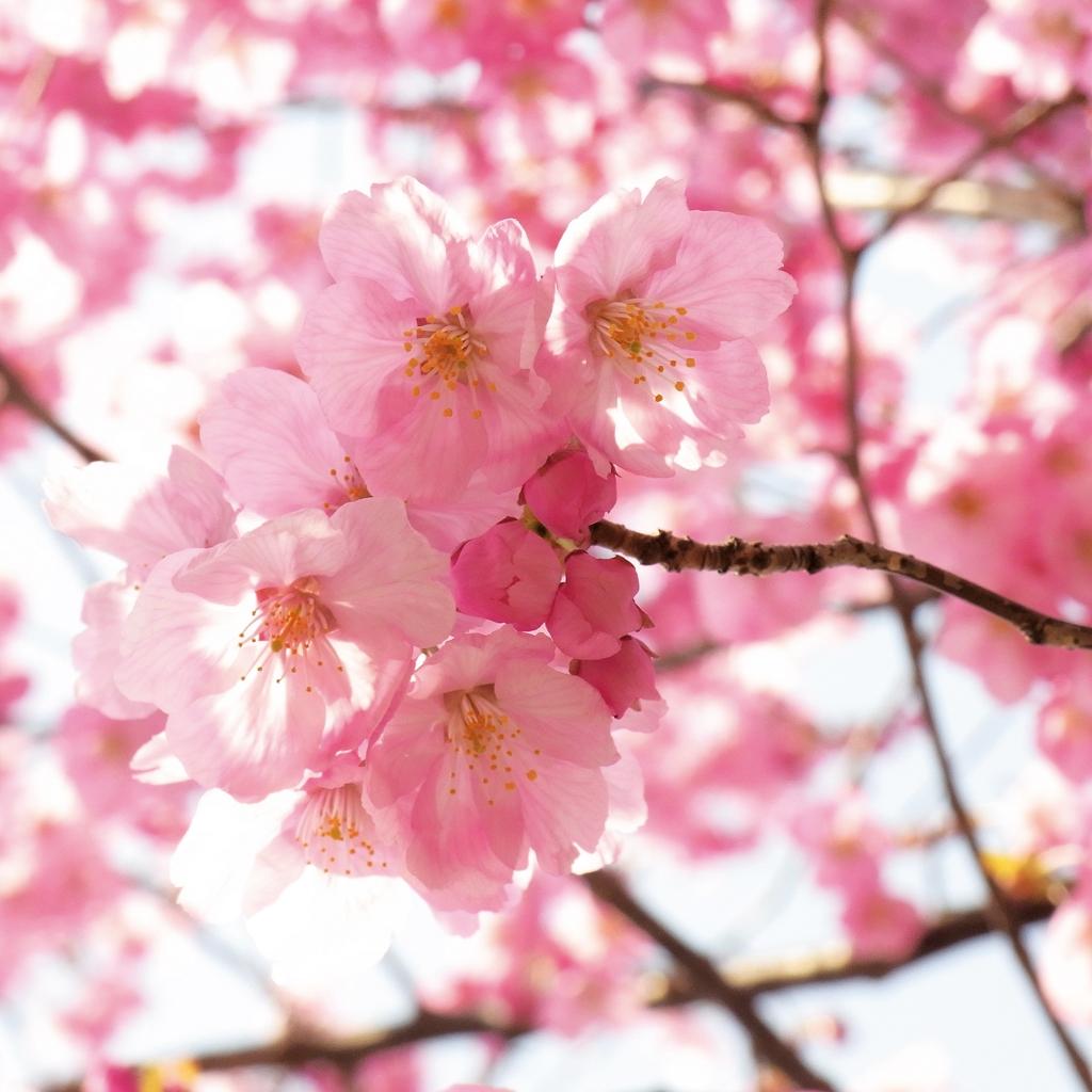 Tavasz, Kép: PP archív