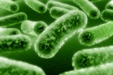 baktérium, baktériumflóra, bélflóra