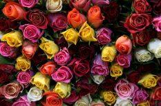 ehető virágok, rózsa, virág