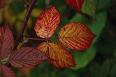 kirándulás, ősz, pihenés