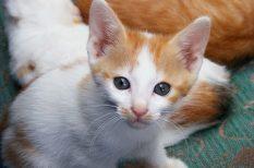 állattartás, macska, színes hírek