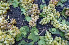 máj, szőlő, szőlős recept