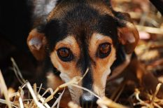 állattartás, háziállat, színes hír
