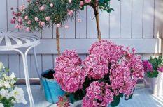 lakberendezés, tavasz, virág