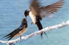 állatvédelem, gondoskodás, védett madár