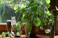 feng shui, növények, otthonunk berendezése