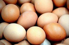 bevásárlás, friss, tojás