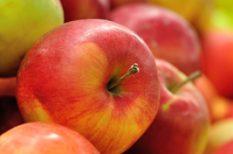egészséges táplálkozás, gyümölcs, nyári programok