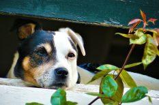 háziállat, kutya, védelem