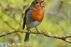 környezetvédelem, madár, természet