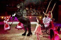 cirkusz, programajánló, szórakozás