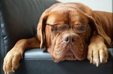intelligencia, kapcsolat, kutya