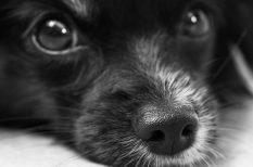 betegség megelőzése, háziállat, kutya