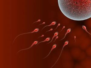 meleg szex spermával