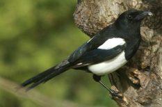 környezetvédelem, kutatás, madár