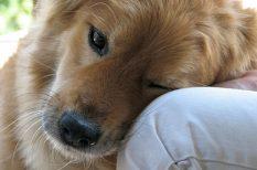 állattartás, kisállatok, kutya, macska, otthon, otthoni kedvencek