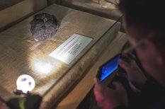 gomba, hungarikum, Magyar Mezőgazdasági Múzeum, rekord, szarvasgomba