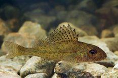az év hala, hal, szavazás, természet, verseny