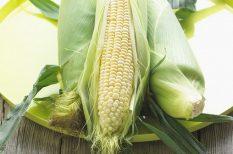 kukorica, kukoricafőzés, nyár