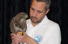 állatok, gyógyítás, madarak, madármentés, segítség, természetvédelem